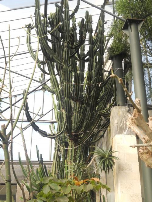 La serra di piante grasse e tropicali / barbara