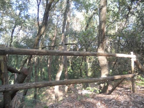 Il bosco dei lecci /barbara