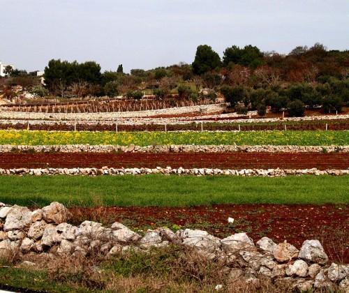 Paesaggio salentino, muretti a secco, terra rossa / @flickr / Cinzia A. Rizzo  fataetoile